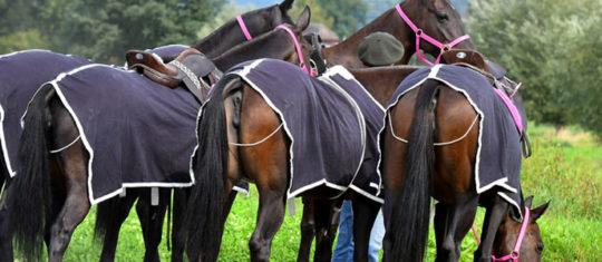 Protéger votre cheval contre les intempéries ou le soleil